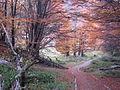 Sendero en otoño.JPG