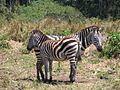 Serengeti National Park-108454.jpg