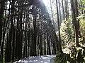 Shanlinxi Forest Road 杉林溪林道 - panoramio.jpg
