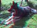Sheba 3D.jpg