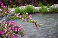 Sia-Wild Roses.jpg