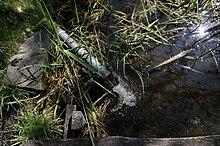 Mehr Fische im Teich datieren