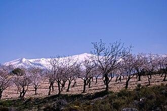 Pico del Caballo - View of the Pico del Caballo behind almond trees