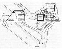 Принципиальная схема потоков вещества и энергии в экосистеме, на примере системы ручьев Сильвер Спринг (англ.