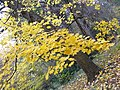Simeria Dendrological park - autumn leaves - panoramio.jpg