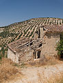 Simple ruin, almond trees plantation, Andalusia, Spain.jpg