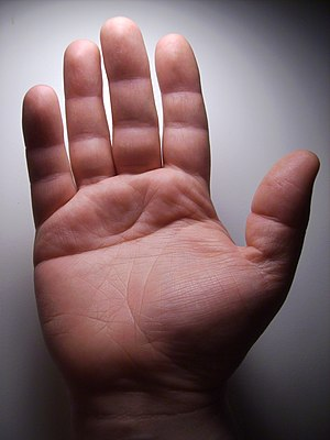 An adult hand showing a single transverse palm...