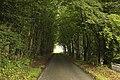 Skelmorlie Castle Road, Skelmorlie (24844156032).jpg