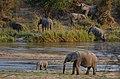 Sloni u řeky Sand River, Krugerův park - panoramio (1).jpg