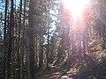 Sommerlicher Herbst Herrenstuhl - panoramio (29).jpg