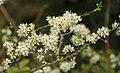 Spring in Epsom (6983375834).jpg
