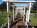 Starr-140210-3346-Wisteria floribunda-habit on trellis-Maui Lavender Crater Rd Kula-Maui (24609163954).jpg