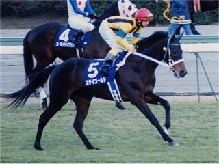 Stay Gold (horse) Japanese-bred Thoroughbred racehorse
