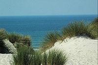 Stella dunes..jpg