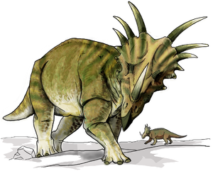 Styracosaurus was a genus of herbivorous ceratopsian dinosaur from the Cretaceous Period