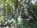 Subiendo a Peñas Blancas - panoramio (64).jpg