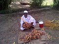 Sudanese man cleaning his harvested dates.jpg