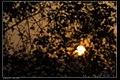 Sunset (16288979322).jpg