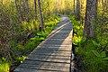 Swamp Walk (1) (8709342706).jpg