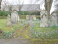 Sway, gravestones and crocuses - geograph.org.uk - 1184216.jpg