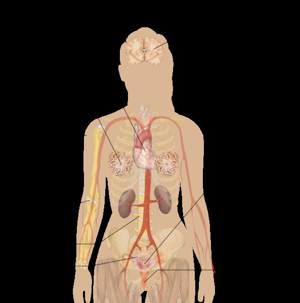 File:Symptoms of menopause (raster).png