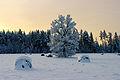 Talvine Aruküla maastik.jpg