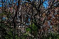 Tangled Tree Branches PLT-TR-FT-13.jpg
