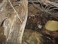 Tarantula spider (7987424193).jpg