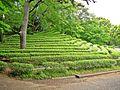Tea Garden - panoramio.jpg