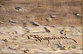 Telemaco signorini, sobborgo di porta adriana a ravenna, 1875, 03 firma.jpg