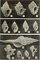 The Conchologists' exchange (1917) (20679241725).jpg