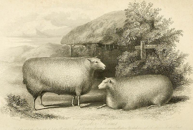 File:The Farmer's magazine (1849) (14762929554).jpg