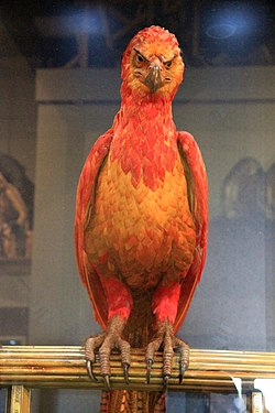 The Making of Harry Potter 29-05-2012 (Fawkes).jpg