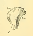 The Osteology of the Reptiles-181 ffewedf dfg dfg hfggfgtghty uhb.png