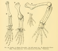 The Osteology of the Reptiles-192 iuyhgh g.png