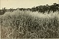 The book of grasses - an illustrated guide to the common grasses, and the most common of the rushes and sedges (1912) (14763590945).jpg