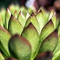 The secret lives of plants. (14754786808).jpg
