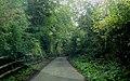 Through the woods - geograph.org.uk - 571515.jpg