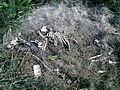 Tierkadaver am Straßenrand DSC00004.JPG