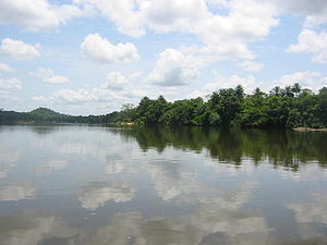 Wildlife of Sierra Leone - Tiwai Island River