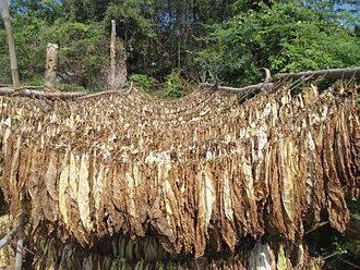 Guntur district - Tobacco Drying at Grandhasiri village in Guntur district