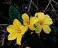 Togatherness of flowers like a friends.jpg