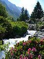 Torrent du Merlet et Rhododendrons.jpg