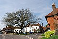 Tree, village green, Brenchley - geograph.org.uk - 1274851.jpg