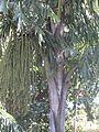 Tree YAAM 1.jpg