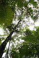 Tree ferns-HS-3418.jpg