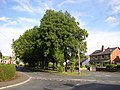 Trees at Smith House Lane, Lightcliffe, Hipperholme - geograph.org.uk - 41595.jpg
