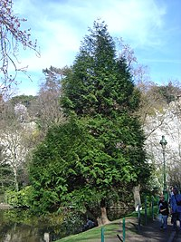Trees dsc00826.jpg
