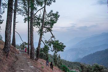 Trek route in binsar wildlife sanctury.jpg
