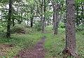 Tremsin, forest (5).jpg